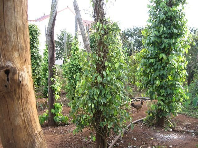 phoca_thumb_l_pepper-farms-new-year-003-640x480-640x480-640x480