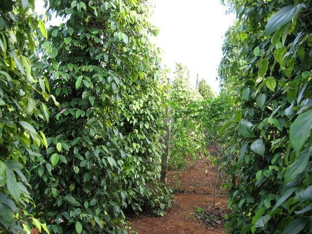 phoca_thumb_l_pepper-farms-new-year-008-640x480-640x480-640x480