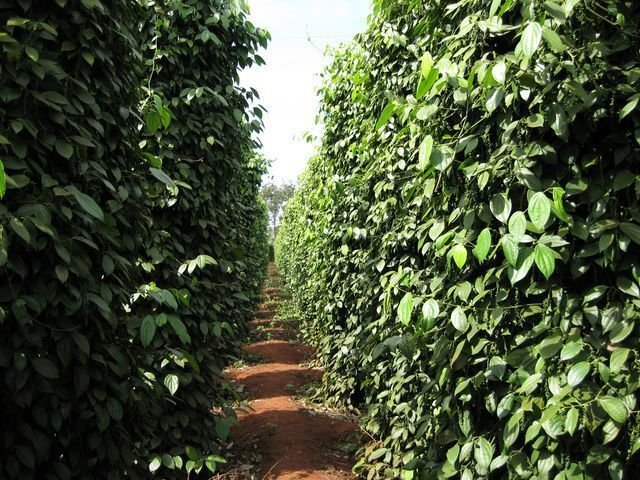phoca_thumb_l_pepper-farms-new-year-021-640x480-640x480-640x480
